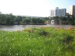 Muscota Marsh