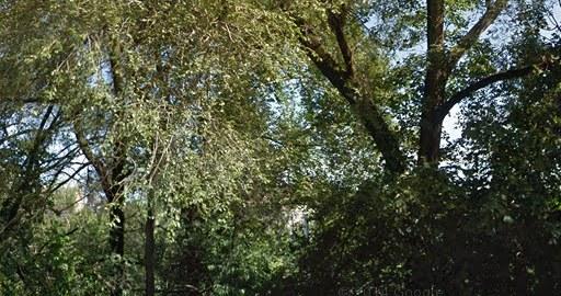 High Bridge Park