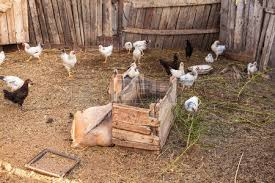 Dorothy's Barnyard Animals