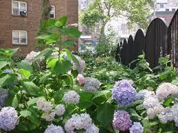 Rondale Pleasant Community Garden