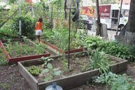 Community Garden East Harlem.jpg