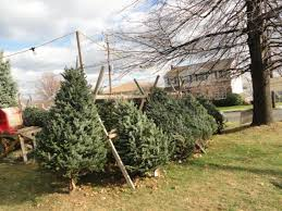 Men's Association Christmas Tree Sales