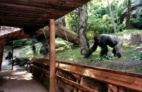 Bronx Zoo Gorilla Forest II
