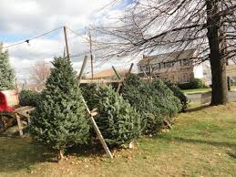 Hasbrouck Heights Men's Association Xmas Tree Sales V