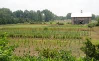 Schraalenburgh Farm in the Spring